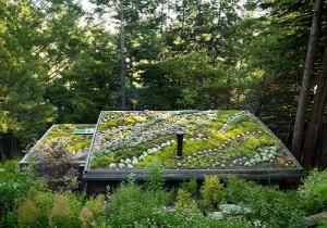 Creatief groen dak