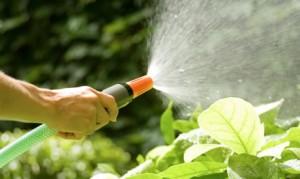 Water geven, groendak