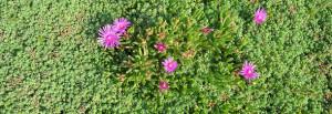 Sedummatten voor in de tuin